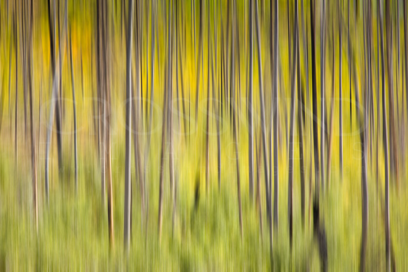 "Abstract, ""All Rights Reserved"", Blur, Blurry, ""Crosswind Images"", Forest, ""Jay Beckman"", Scenery"