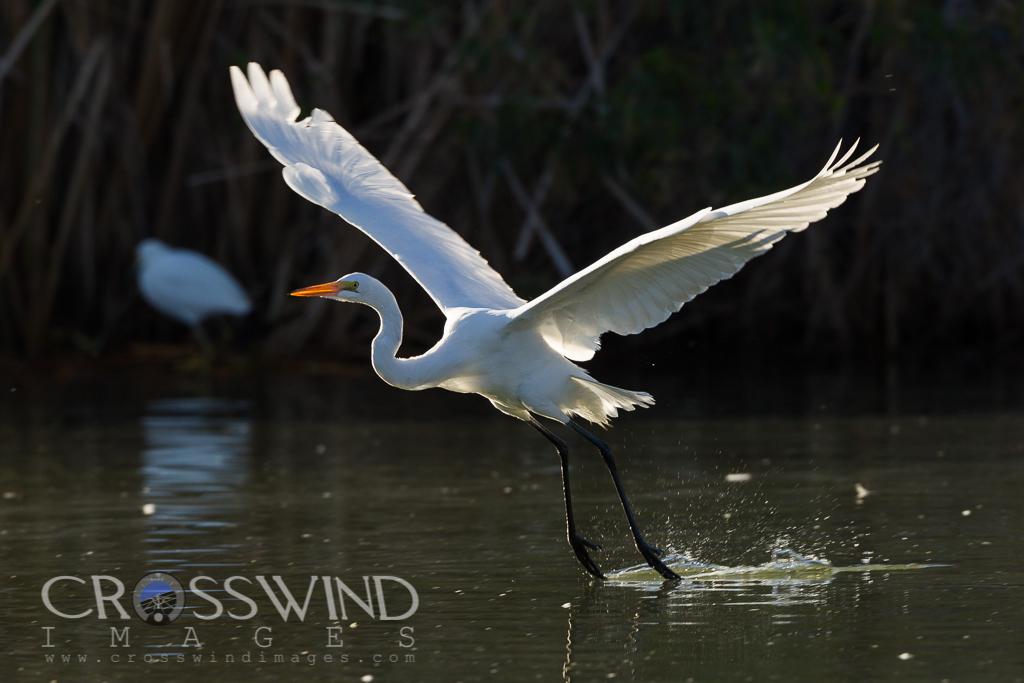 IMAGE: http://crosswindimages.com/img/s8/v79/p1395182988.jpg